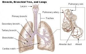 cirugía torácica pulmones